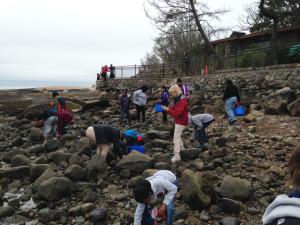 Catching Asian Shore Crabs