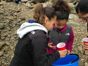 Students hunting crabs close 1 small