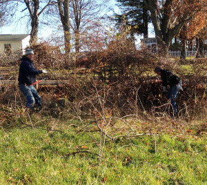 Steve Gallicher and Amos Barnes take out a multiflora rose bush