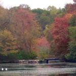 BLT-FallFoliageWalk